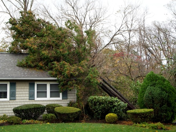 what to do if a tree falls on your house - paragon certified